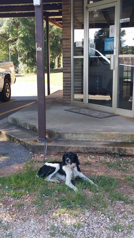 A few weeks ago, Greenville's animal control officers found this dog improperly surrendered outside the shelter. (Photo from the Greenville Animal Shelter Facebook page)